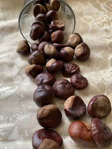 Photograph of horse chestnuts spilling out of a glass container